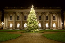 Christmas tree in Peckwater Quad
