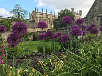 Memorial Garden with Allium 'Purple Sensation'. Photo by John James