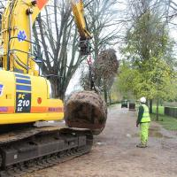 Heavy plant crossing? The tree being carefully carried down New Walk to its planting position.