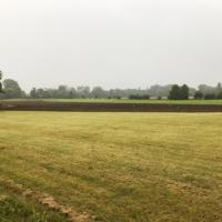 The area in the foreground hasn't been cultivated as it has a strong population of cowslips that we don't want to lose.