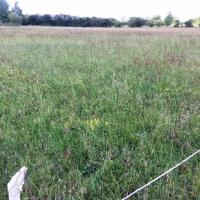 The donor meadow ready to be cut.