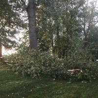 Fallen branches, a major safety risk.