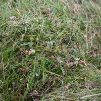 Close up of green hay with plenty of seedpods in it. (Photo © Catriona Bass)