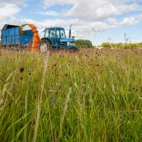 Harvesting the green hay at Long Mead with a direct cut forage harvester (Photo © Catriona Bass)