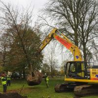 Lifting the tree into position.