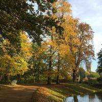Gentle yellow hues provided by the Lime Trees in Broad Walk and New Walk