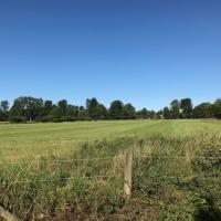 Christ Church Meadow after the initial hay cut.