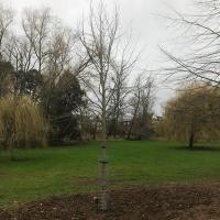 The three new trees in position.