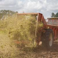Spreading the green hay.  (Photo © Catriona Bass)