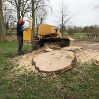 Grinding out the stumps.