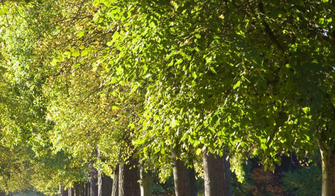 Trees in Christ Church Meadow