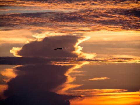 Sunset image with bird