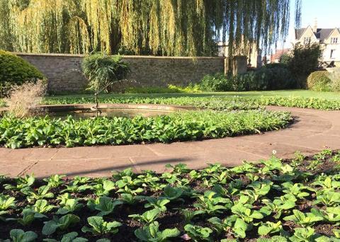 Borders in the Rose Garden