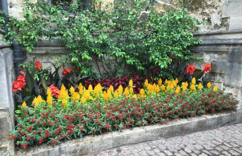 Colourful display of mixed planting in Schools Quad