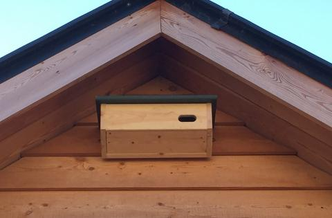 A swift box newly installed