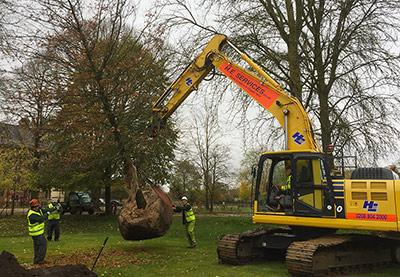 A mechanical digger lifting the tree in to place