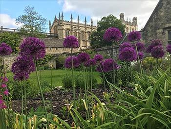 Memorial Garden with Allium 'Purple Sensation'