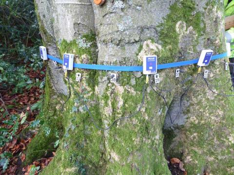 A tomograph fitted to the tree