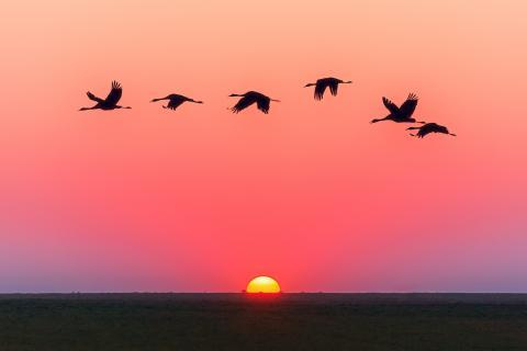Birds flying across sunset sky
