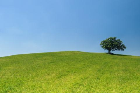 Tree on a hill against blue sky