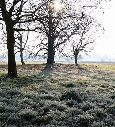 wintry trees