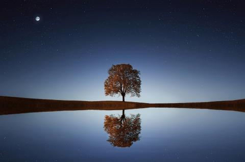 Tree reflected in a lake